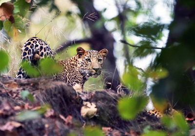 Satpura-National-Park
