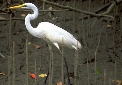 Sunderbans-National-Park